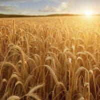 Grano italiano, accordo Barilla - Crédit Agricole per sostenere la filiera