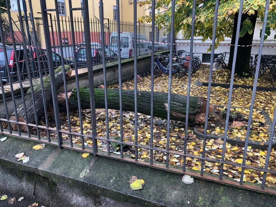 Parma, cade grosso albero nel cortile del liceo Romagnosi