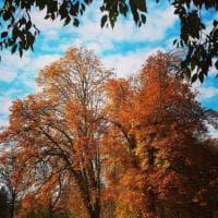 Parma si veste d'autunno - Foto