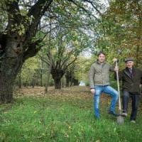 Parma, il bosco che cresce a San Prospero
