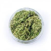 Da Parma al Canada: il grande salto della cannabis EasyJoint
