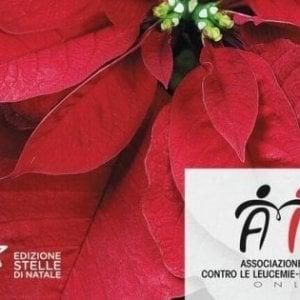 Parma, in piazza le Stelle di Natale dell'Ail