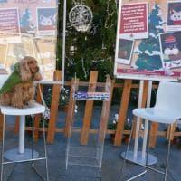 Parma, la novità del Natale ? Le foto con i cani sotto l'albero in piazza