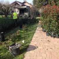 Parma, avviati i lavori per piantare circa 350 alberi
