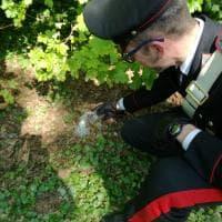Parma, ancora droga nel parco Ducale: trovate dosi di coca, marijuana e