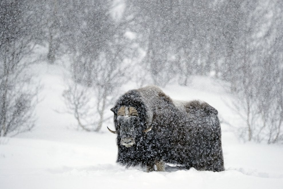 """Parma, alla Feltrinelli gli scatti """"selvaggi"""" di Alessandro Seletti - Foto"""