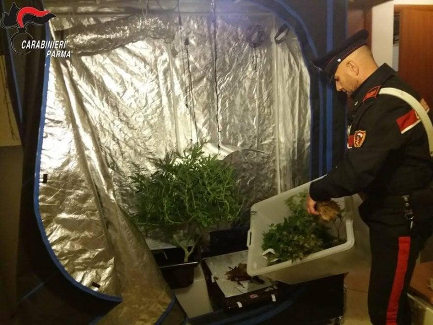 Parma, l'appartamento dello studente è una serra di marijuana - Foto