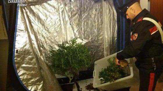 Parma, coltiva marijuana negli armadi di casa: nei guai uno studente universitario