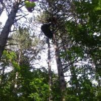 Pineta di Cozzano: finisce con il parapendio fra gli alberi