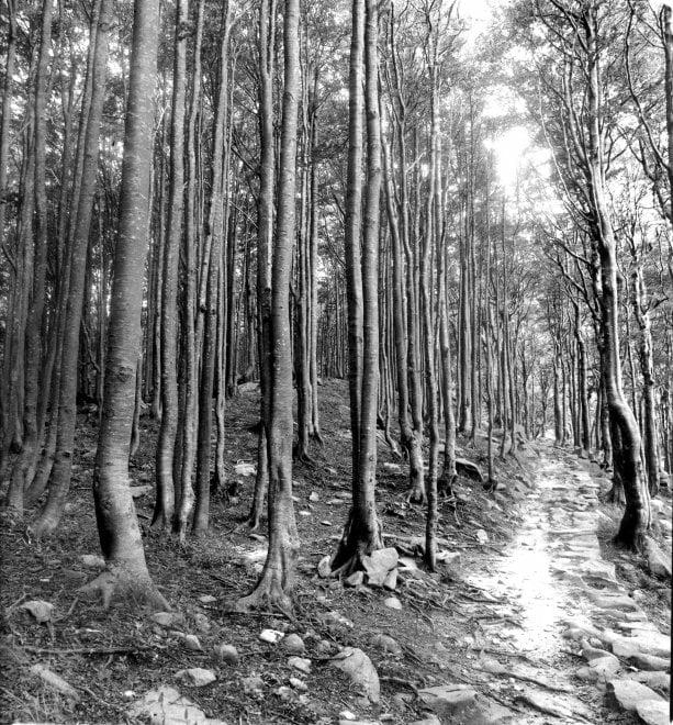 I boschi di Marco Falini: emozioni in bianco e nero - Foto