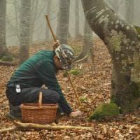 Escursioni micologiche nel Parmense: passione slow per i funghi