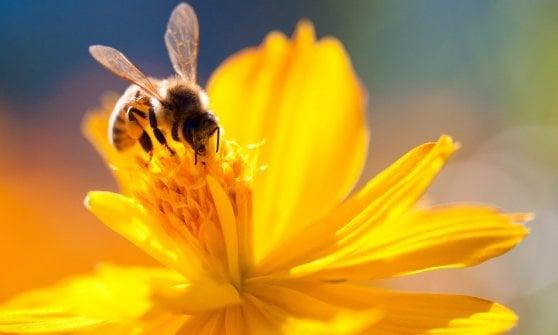 """A Fidenza i bambini lanciano """"bombe"""" di semi per aiutare le api"""