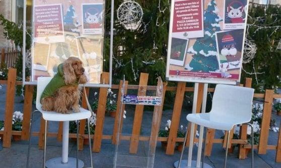 """Capodanno, l'assessora Paci rilancia il no ai botti: """"Disturbano gli animali"""""""