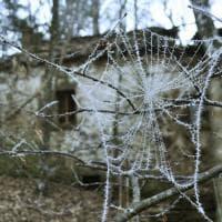 Appennino Parmense, i ricami della brina nei boschi - Foto