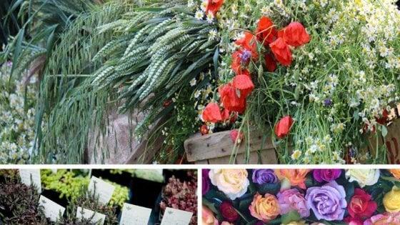 Da Tabiano a Busseto passando per Colorno, torna la stagione dei fiori