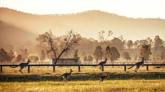 Da Barilla un sostegno al Wwf per l'emergenza incendi in Australia