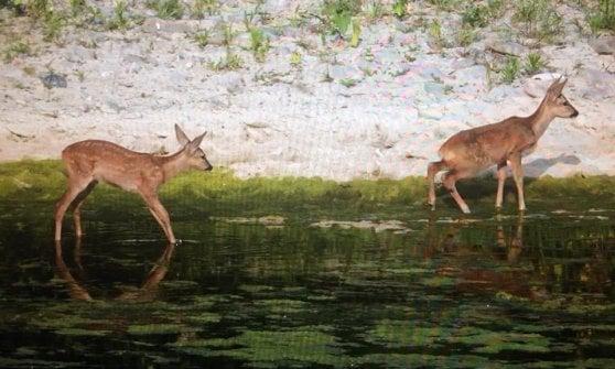 Sfalci nel torrente Parma, botta e risposta fra ambientalisti e Aipo