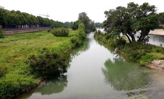"""I nidi del Gruccione nel torrente Parma, naturalisti: """"Non distruggeteli"""""""
