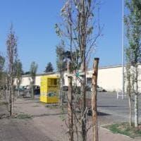 Viale Villetta a Parma, alberi nuovi già secchi: lettori indignati
