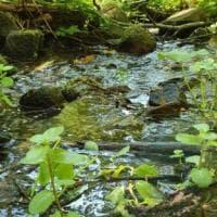 L'incanto dei boschi dell'appennino parmense - Foto