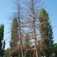 Parma, interventi manutentivi nel parco Ferrari: saranno abbattute 30 piante