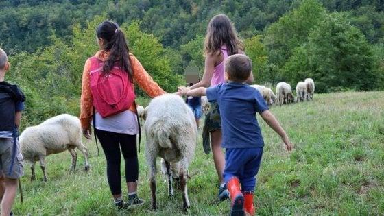 Parma, pecore e cani da pastore alleati dei bambini con fragilità