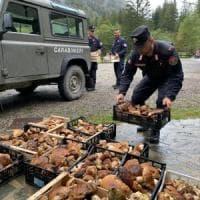 Raccolta di funghi illecita: più di un quintale di porcini sequestrati