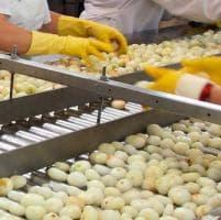Alimentare, sindacati in piazza a Parma per il contratto