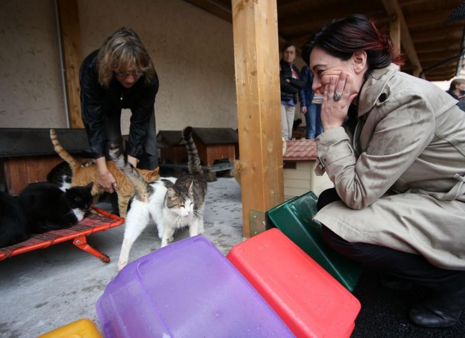 Porta portese inaugurata nuova oasi felina con 250 gatti - Porta portese offerte lavoro roma ...