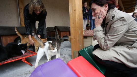 Alberi e cucce restyling per l 39 oasi felina di porta - Porta portese milano ...