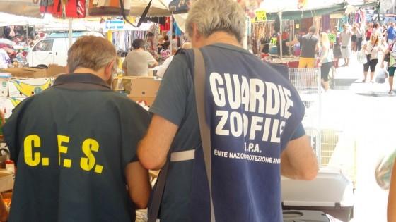Annunci lavoro roma porta portese - Porta portese offerte lavoro roma ...
