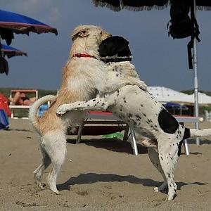 Via libera alle bau beach, il Tar boccia il divieto di Marino