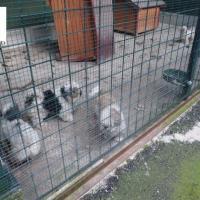 Senza acqua e denutriti, salvati i cani imprigionati in un allevamento-lager