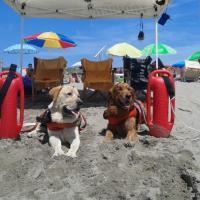 Ostia, giovane rischia di affogare in mare: i cani bagnino lo salvano