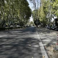 Da lunedì per 5 giorni stop al tram 2: si potano gli alberi