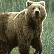 Ciociaria, trovato morto cucciolo di orso:  forse avvelenato