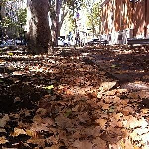 La capitale delle foglie morte. E da mesi nessuno taglia l'erba