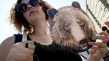 Sit-in al ministero per l'orso Daniza