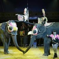 """""""Al circo più controlli per fermare i maltrattamenti"""""""
