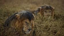 La vita selvaggia degli animali  Foto