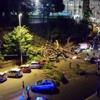 Largo Mazzoni, albero cade e travolge le auto in sosta