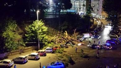Largo Mazzoni, albero crolla per il vento e travolge le auto in sosta  Foto