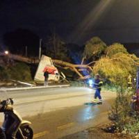 Tiburtina, albero crolla su un'auto: miracolosamente illeso il conducente