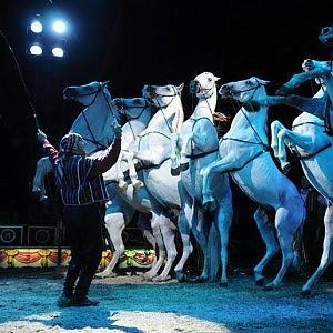 il Natale del circo festeggia gli animali