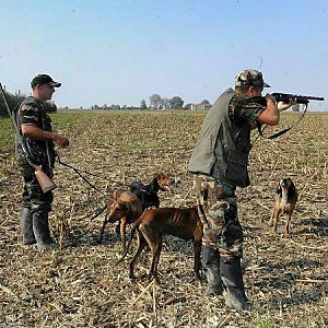 Sos caccia, anche l'Europa ci chiede di fermarci
