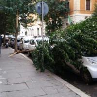 Maltempo, forti raffiche di vento: alberi caduti e due feriti