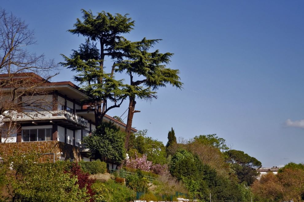 Glicini e pini nani la magia del giardino giapponese 1 for Giardini giapponesi roma