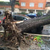 Maltempo a Roma, crollano alberi sulle auto: un morto e un ferito
