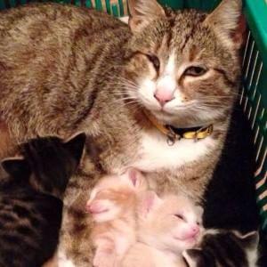 Rapiscono gatta della vicina per sfamare i loro pitbull