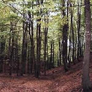 Stop al taglio del bosco vecchio, salviamo la faggeta di Monte Venere